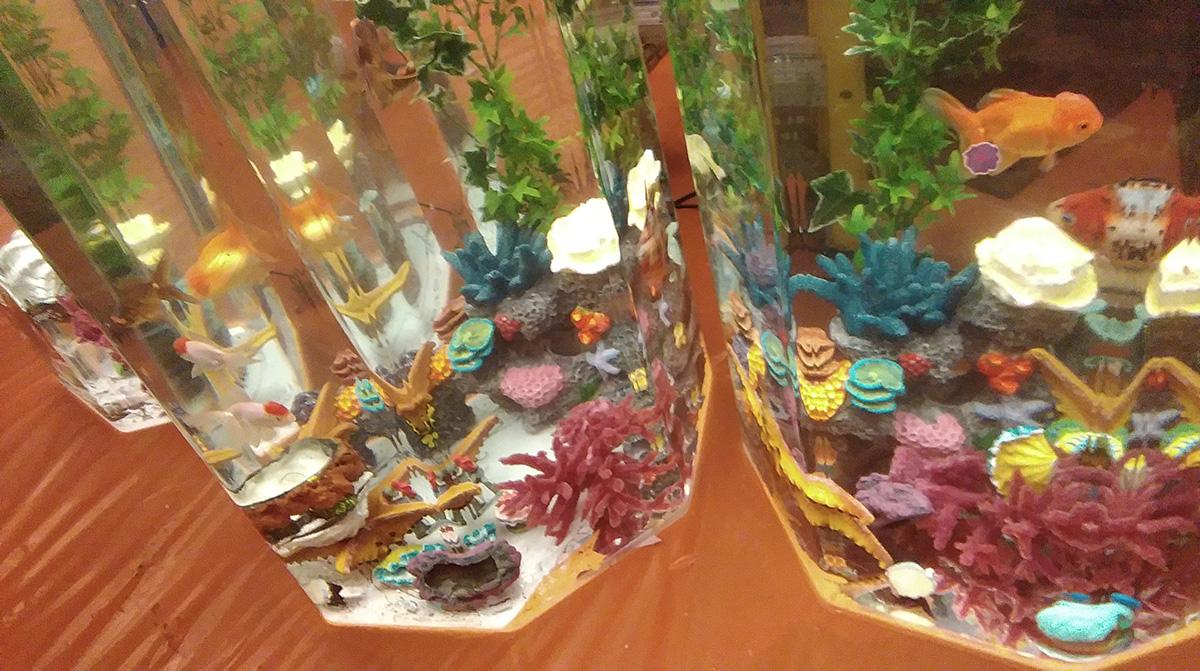 April-blog-aquariums4