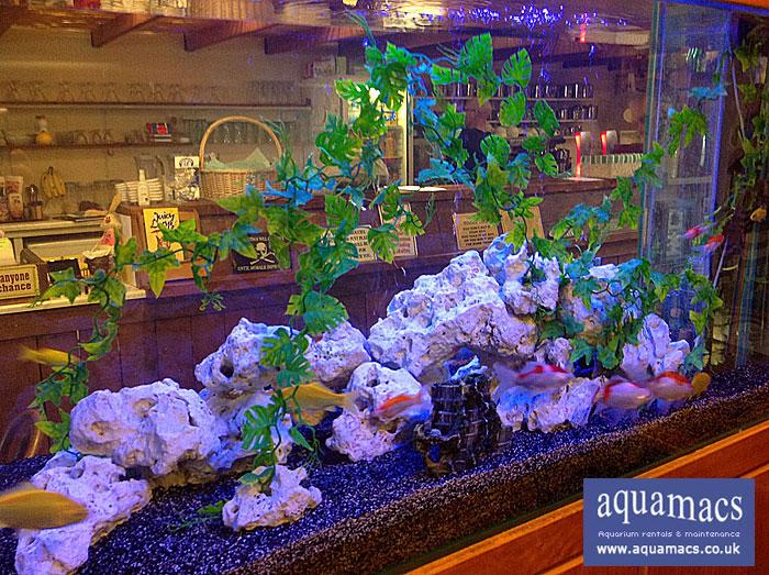 Aquarium Rentals From Aquamacs Uk