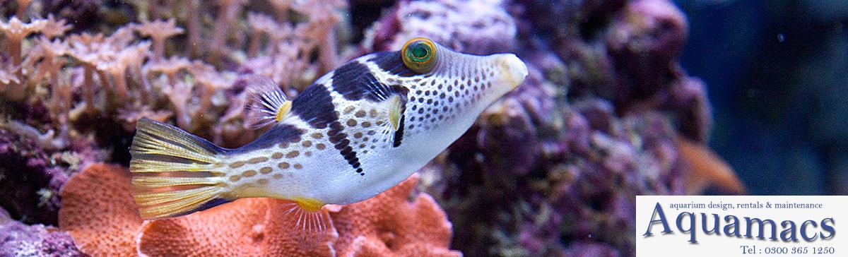 aquarium-rentals