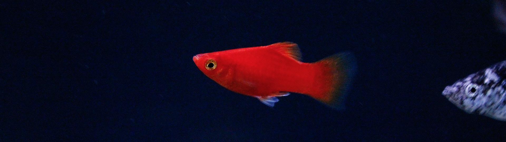 aquarium-slides6