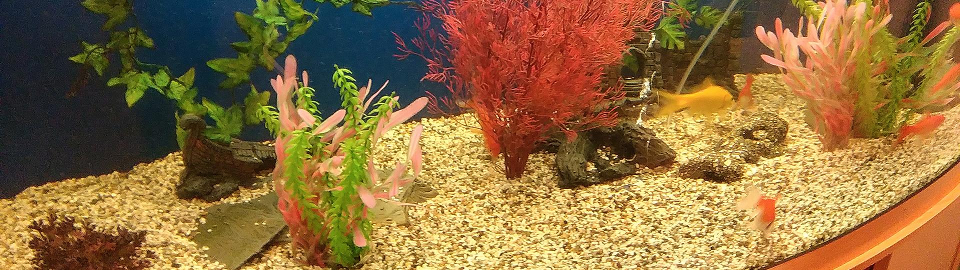 aquarium-slides7