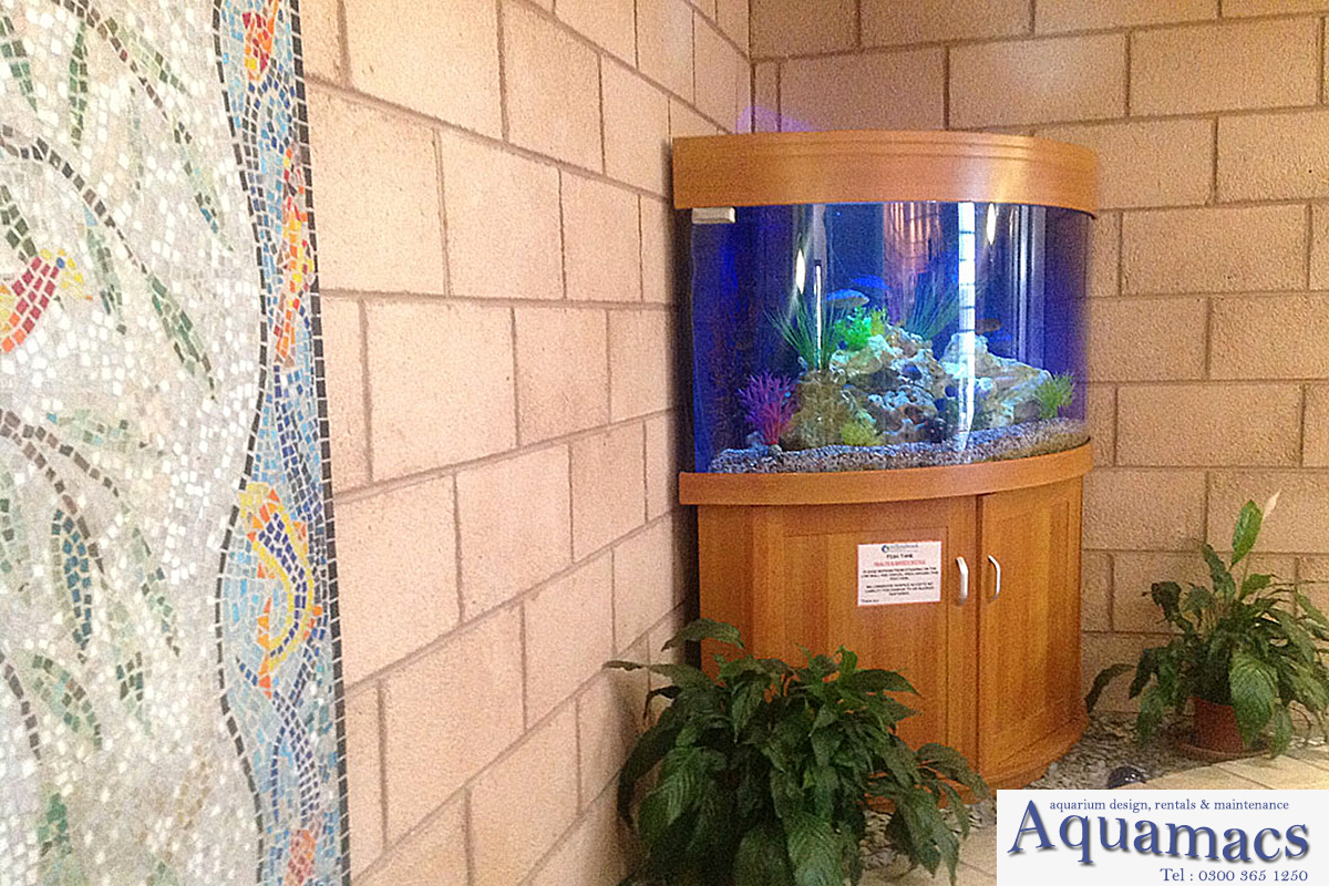 Aquariums By Aquamacs9
