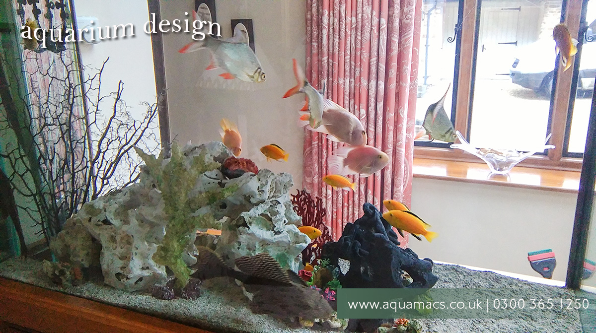 Room Temperature Fish Tank