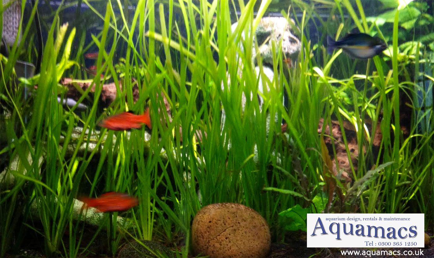 heavy-plany-aquarium