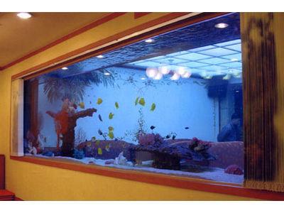 National geographic careers januari 2013 for Cold water fish tanks